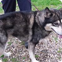 Adopt A Pet :: Youki - Augusta County, VA