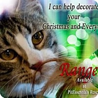 Adopt A Pet :: Ranger - Norman, OK