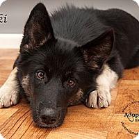 Adopt A Pet :: Suki - Westfield, NY