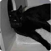 Adopt A Pet :: Mark - Marietta, GA