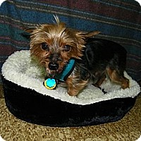 Adopt A Pet :: Taz - South Amboy, NJ