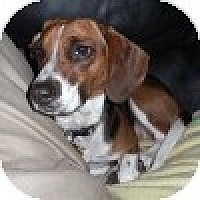 Adopt A Pet :: Mercedes - Novi, MI