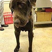 Adopt A Pet :: Dock - Cumming, GA