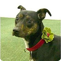Adopt A Pet :: Lola - Mocksville, NC