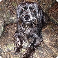 Adopt A Pet :: Joanie - Hazard, KY