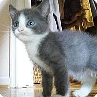 Adopt A Pet :: Mousey - Kirkwood, DE