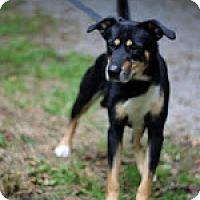 Adopt A Pet :: Jaeger - Tinton Falls, NJ