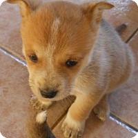 Adopt A Pet :: Jerome - dewey, AZ