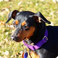 Adopt A Pet :: Roxie - Nashville, TN