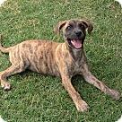 Adopt A Pet :: RUTH