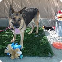Adopt A Pet :: Gracie - Canoga Park, CA