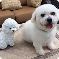 Adopt A Pet :: MAX - East Hanover, NJ