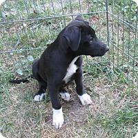 Adopt A Pet :: Mary Ann - Middletown, RI