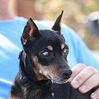 Adopt A Pet :: Pickle - Madera, CA