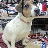 Adopt A Pet :: Eva - Maryville, TN