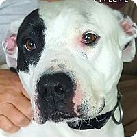 Adopt A Pet :: Millia - Fincastle, VA