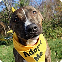 Adopt A Pet :: Sonny - Wilmington, DE