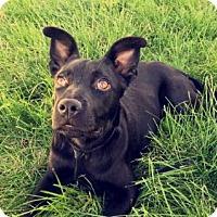 Adopt A Pet :: Lakelyn - Salt Lake City, UT