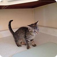 Adopt A Pet :: Winnie - Tremont City, OH