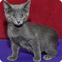 Adopt A Pet :: Duncan - Lenexa, KS