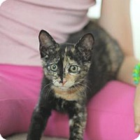 Adopt A Pet :: Ella Fitzgerald - New York, NY