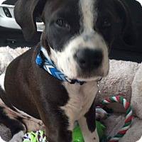 Adopt A Pet :: Frederick - Hockessin, DE
