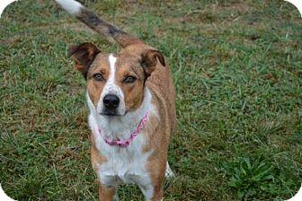 Catahoula Leopard Dog/Border Collie Mix Dog for adoption in Washougal, Washington - Franny