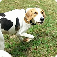 Adopt A Pet :: Daisy - Shinnston, WV