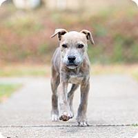 Adopt A Pet :: Lt. Dan - Elkton, FL