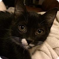 Adopt A Pet :: Punky Brewster - Glendale, AZ