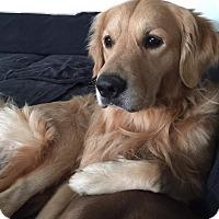 Adopt A Pet :: Michael - Temple City, CA