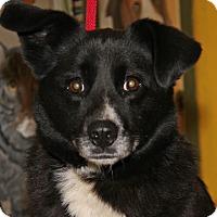 Adopt A Pet :: Fancy - Marietta, OH