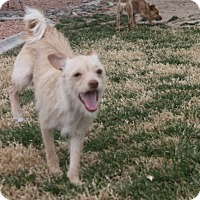 Adopt A Pet :: Sunshine - Henderson, NV