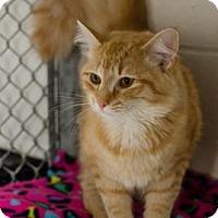 Adopt A Pet :: Tangerine - Greenwood, SC