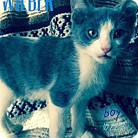 Adopt A Pet :: Wilber - Silver Lake, WI