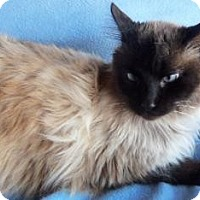 Adopt A Pet :: Caedmon - Reduced Fee - Ennis, TX