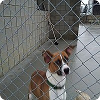 Adopt A Pet :: Emmet - Wallaceburg, ON