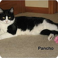 Adopt A Pet :: Pancho - Portland, OR