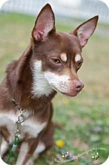 Worcester Dog Rescue