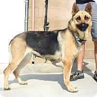 Adopt A Pet :: Morgana - Santa Rosa, CA