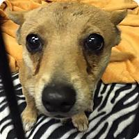 Adopt A Pet :: JohnDeere - Waycross, GA