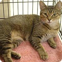 Adopt A Pet :: Rosey - Hallandale, FL