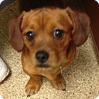 Adopt A Pet :: Norman - Fairview Heights, IL