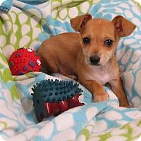 Adopt A Pet :: LARS - Bedminster, NJ