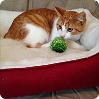 Adopt A Pet :: Haley - Simpsonville, SC