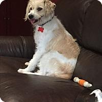 Adopt A Pet :: Delilah - El Segundo, CA