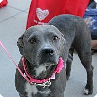 Adopt A Pet :: Angel - Ft. Myers, FL