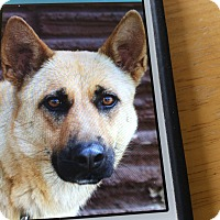 Adopt A Pet :: DIXIE VON DITZINGEN - Los Angeles, CA