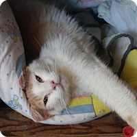 Adopt A Pet :: PEACHY - San Pablo, CA