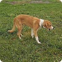 Adopt A Pet :: Dixie - Stevens Point, WI